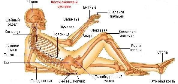 сайт артроз артрит